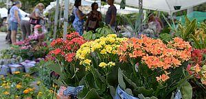 Primavera na Bahia será mais quente do que a de 2017