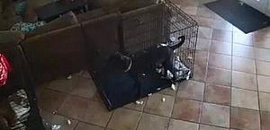 Fantasma? Vídeo mostra cachorro assustado sendo puxado por coleira