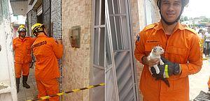 Filhote de gato fica preso entre paredes e bombeiros são acionados para o resgate