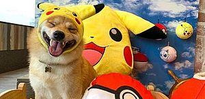 Conheça Maru, o cachorro mais sorridente do Instagram; veja galeria