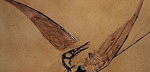 """Fóssil de """"dragão voador"""" é encontrado preservado no deserto do Chile"""