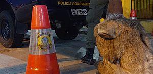 PRF flagra motoristas praticando crime ambiental e resgata bicho-preguiça