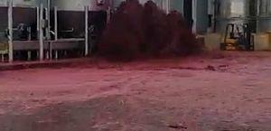 Vídeo: tanque de vinho explode e derrama 50 mil litros da bebida em vinícola, na Espanha