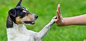 Como melhorar a comunicação com o animal de estimação