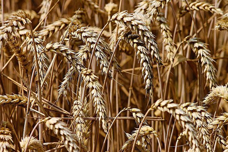 Previsão para a produção de soja é 2,6% menor do que a do ano passado