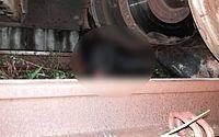 CBTU alerta para o aumento no número de acidentes com animais nas ferrovias