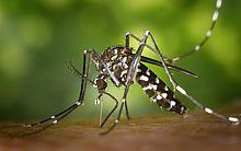 Combate a mosquito é trabalho em conjunto