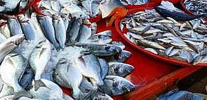 Doença da urina preta: infectologista recomenda consumo de peixes pescados em alto mar