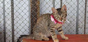 Animais especiais resgatados em Brumadinho aguardam adoção responsável