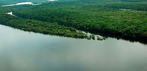Conselho do PPI recomenda concessão de florestas no Amazonas