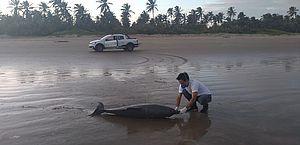 Mais dois golfinhos são encontrados mortos na praia de Feliz Deserto