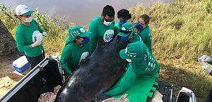 Morre baleia que havia sido resgatada no mar de Feliz Deserto