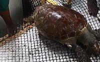 Homem transporta tartaruga em decomposição em ônibus lotado; veja vídeo