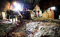 Cães, gatos e até crianças dividiam o ambiente sujo com o sangue e restos de animais