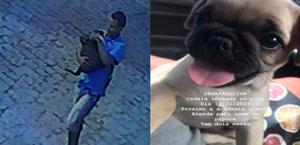 Vídeo: homem invade casa e furta filhote de cachorro em Maceió