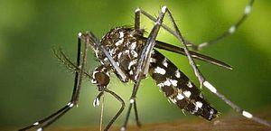 59 cidades de AL estão em alerta ou risco de surto de dengue, zika e chikungunya