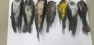 Milhares de pássaros estão caindo mortos do céu dos EUA