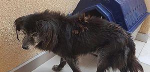 Cão surdo que estava desaparecido há 10 anos reencontra os donos