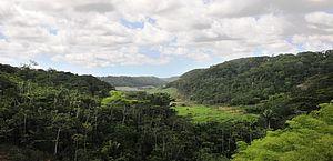 Alagoas é destaque nacional em redução do desmatamento na Mata Atlântica