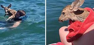 Jovem se joga em lago e salva cervo que se afogava: vídeo