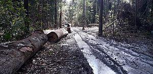 Desmatamento na Amazônia seria o dobro do registrado pelo Inpe, aponta estudo