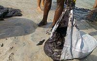 Mancha de óleo já chegou a praias de sete cidades de Pernambuco