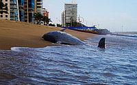 Boto é encontrado morto na Praia de Iracema, em Fortaleza