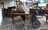 Jovem de 19 anos é preso por maus-tratos a um cavalo no Jacintinho