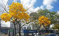 Primavera começa e traz menos chuvas e mais calor para Alagoas
