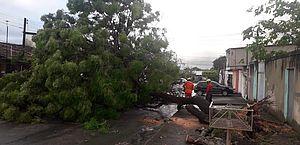Árvore obstruiu via no Tabuleiro do Martins; ninguém ficou ferido