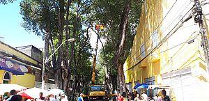 Linhas têm itinerário alterado para serviço na Rua das Árvores