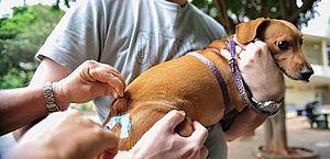 Campanha de vacinação contra a raiva será realizada no Pinheiro nesta quinta-feira
