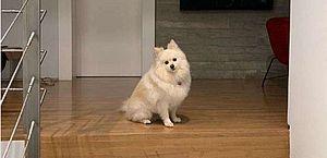 A cadelinha