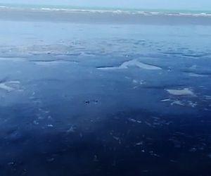Vídeo mostra 'mar de óleo' próximo ao santuário do peixe-boi