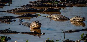 Projeto determina condições de proteção e uso sustentável do Pantanal