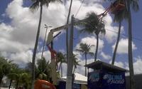 Risco de queda: saiba como solicitar poda de árvores em Maceió