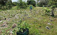 Três mil mudas de árvores são plantadas na APA da Marituba do Peixe em Penedo