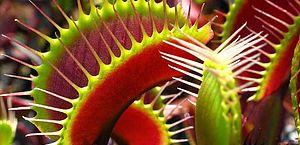 Já viu uma planta carnívora? Conheça sete espécies que comem animais