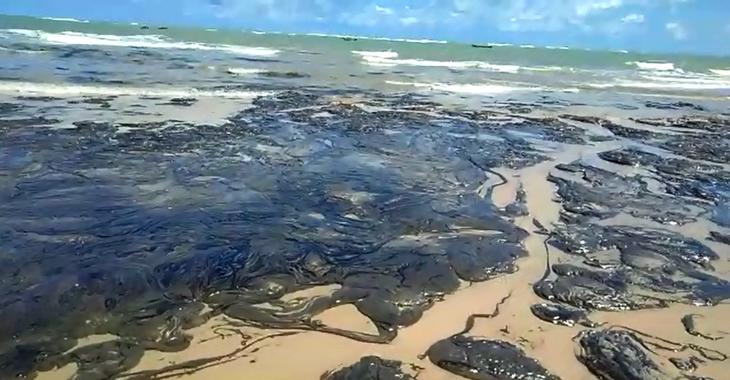 Local de desova de tartarugas em Coruripe é atingido por manchas de óleo