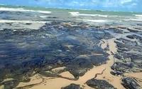 Especialistas ambientais debatem danos após manchas de óleo nas praias alagoanas