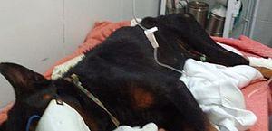 Suspeito de enterrar cachorro vivo na Barra de São Miguel é identificado pela polícia