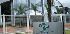 Embrapa: planta amazônica ajuda a combater pragas agrícolas