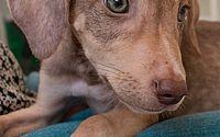 'Adote um amigo': shopping faz ação especial para adoção de animais