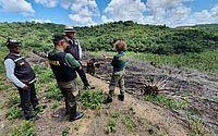 Ministério Público deflagra operação para coibir desmatamento em Alagoas e mais 16 estados