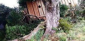 Caminhão atingiu árvore