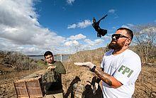 Ao todo, foram 323 aves e 20 jabutis devolvidos à caatinga