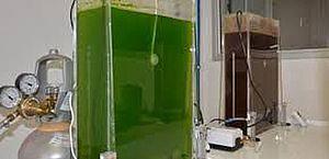 Governo altera selo que permite reduzir contribuições para biodiesel