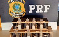Homem é detido pela PRF com mais de 20 aves em gaiolas na BR-101