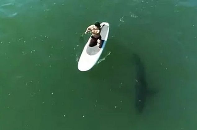 Vídeo: Orlando Bloom é cercado por tubarão enquanto surfava em Malibu